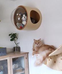 Разработаны инновационные кровати для кошек