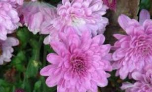 Растения, которые цветут даже зимой