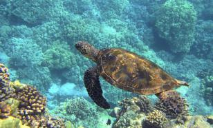 Биологи выяснили, почему морские черепахи едят пластик