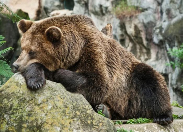 """Эксперт поделился методами выжить во время встречи с медведем: """"Курить и петь"""""""