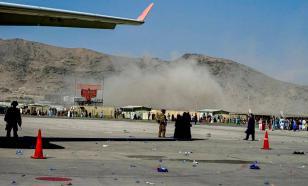 Пентагон бросил в Афганистане служебных собак