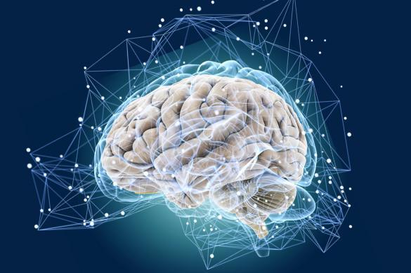 """Нейробиологи: """"Смерть мозга обратима"""""""