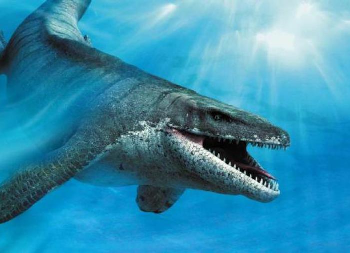 Палеонтологи обнаружили яйцо морского ящера возрастом 68 млн лет