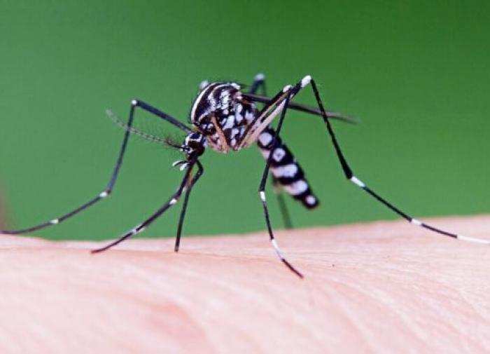 В Краснодарском крае и Крыму обнаружили смертельно опасных комаров