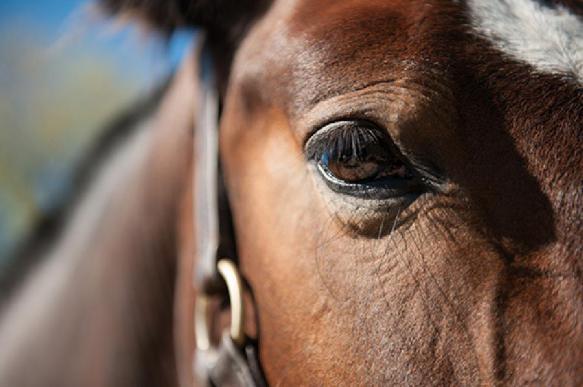 Серийного убийцу лошадей ищут в штате Кентукки