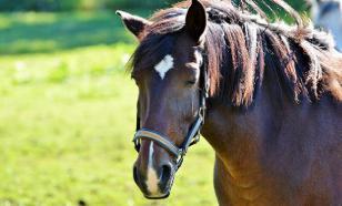 Выставка последних достижений мировой конной индустрии