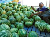 В Москве стартовал сезон торговли арбузами.