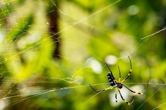Врач извлек из уха китаянки живого паука