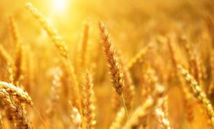 Россия отодвинула США и Евросоюз на рынке экспорта пшеницы