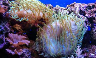 В Индийском океане обнаружили новых для науки существ