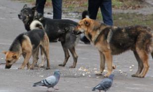Стая бездомных собак напала на жительницу Уссурийска