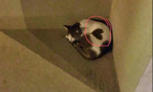 В кошку из Дубаи невозможно не влюбиться из-за символа сердца на туловище