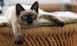 Ученые: кошки, как и собаки, копируют своих хозяев