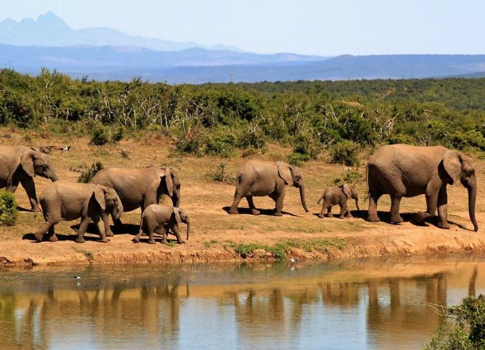 Нейросеть займётся подсчётом слонов в заповеднике ЮАР
