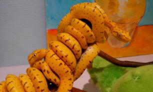 Житель Ростова завел дома 20 змей
