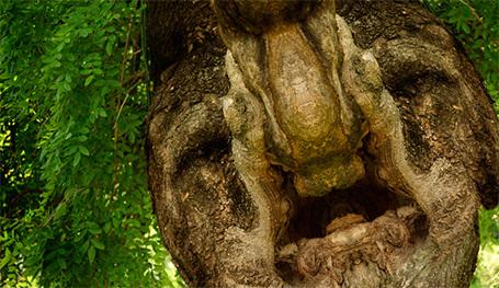 И у деревьев есть... лица