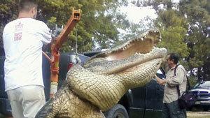 Ловись, крокодил, большой и маленький!