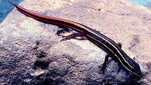 В лесах Амазонии открыто множество новых видов