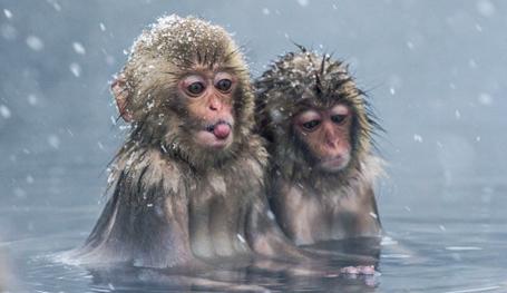 Символ года замерзает. И снова об обезьянах