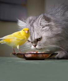 Друзья-товарищи