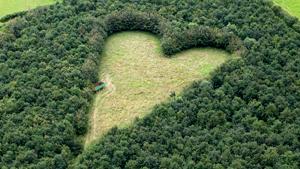Сердечная поляна - память о любимой жене