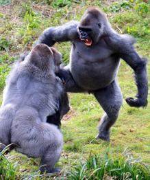 В мире животных: Разборки? На любом уровне!