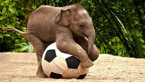 Слоненок-футболенок