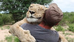 Аббатство Даунтон помолодело, обнимашки с львицей и соломенный медведь