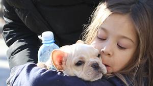 Чем больше я узнаю людей, тем больше люблю собак