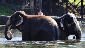 Купание слонов в Амурском заливе