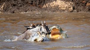 Крокодилова трапеза