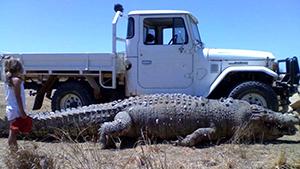 Крокодильи истории