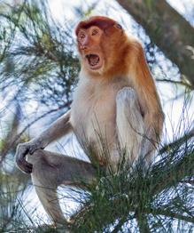 Зоологи в тупике: Это необъяснимо!