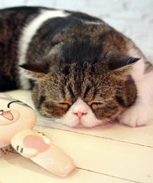Нельзя завести кота? Это трагедия. Выход есть!
