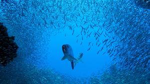 Ослепительный блеск миллионов рыб