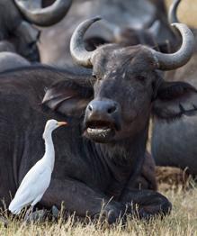 Кого из животных действительно стоит бояться