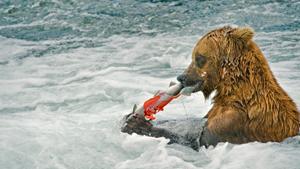 Короли рыбалки