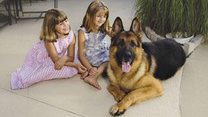 Сторожевой пес за 230 тысяч долларов