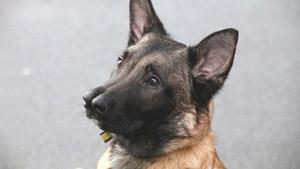 Двуносая собака, цветной забег и ловкие дворняги
