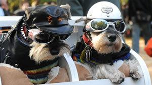 Суперкостюмчик для собаки