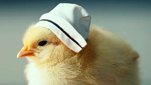 Цыплятки в шляпках