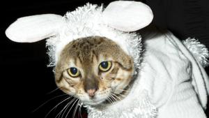 Последний писк кошачьей моды