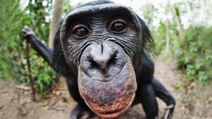 Обезьяний приют в Конго