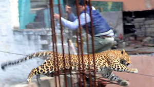 Мир животных, который не оставляет равнодушным