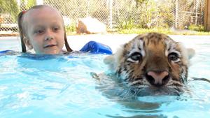 Плавание с хищником