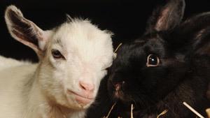 Непридуманные истории о животных