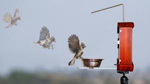 Птичья фотобудка