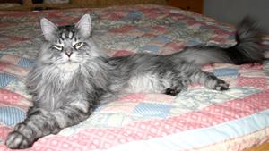 Cамый длинный в мире кот