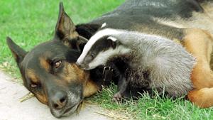Собака не только человеку друг