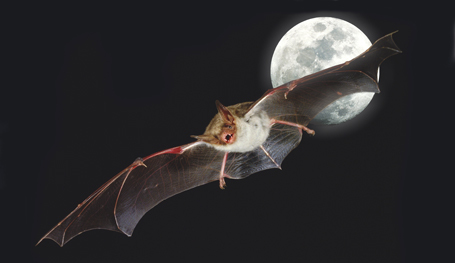 Луна - вечная загадка
